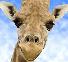 """Funny Face"" - Giraffe giving a very animated smiling face by John Hartung"