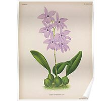 Iconagraphy of Orchids Iconographie des Orchidées Jean Jules Linden V15 1899 0058 Poster