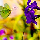 Butterfly by Jim Haley