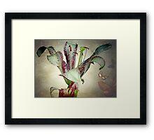 Purple lily ©  Framed Print