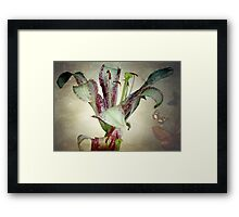 Purple lily ©  Framed Print