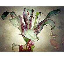 Purple lily ©  Photographic Print