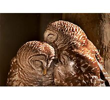 """""""In CoHoots"""" Two Barred Owls Snuggling Photographic Print"""