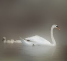 Dreamy White Enchantment by enchantedImages