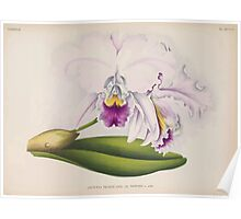 Iconagraphy of Orchids Iconographie des Orchidées Jean Jules Linden V14 1898 0034 Poster