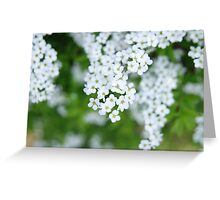 Spiraea Greeting Card