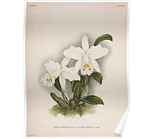 Iconagraphy of Orchids Iconographie des Orchidées Jean Jules Linden V14 1898 0140 Poster