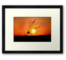 Black Orange Framed Print