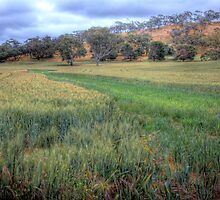 The Grain Of Life - Mine Road, Kanmantoo, The Adelaide Hills by Mark Richards