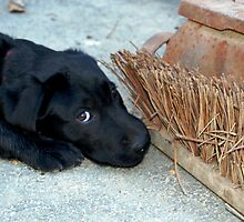 Sweet Pup by nadinecreates