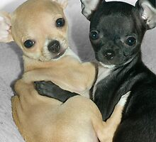 """Chummy Chihuahuas"" - Looks like Puppy Love by ArtThatSmiles"