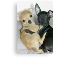 """Chummy Chihuahuas"" - Looks like Puppy Love Canvas Print"