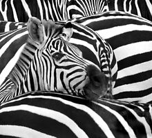 """Stripes"" - Optical Illusion of the stripes on the zebras by ArtThatSmiles"