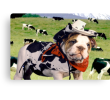 """Cow Dog"" - An English Bulldog wants to be a Cow Dog. Canvas Print"