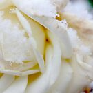 white winter by yvesrossetti