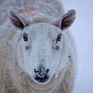 What Ewe Lookin' At by Lynne Morris