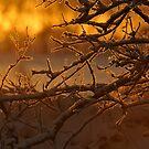 Frosty sunrise by Alan Mattison