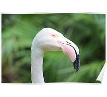 Flamingo Dreaming Poster