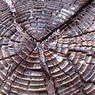 Tree Stump by Gloria Abbey