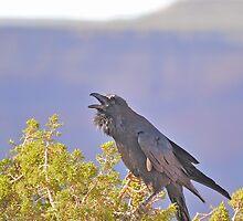 Death Valley - Ravens World by Chuck Harlins