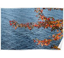 Autumn Leaves at  Brome Lake, Quebec, Canada 2014 Poster