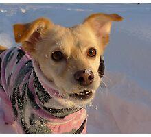 Snow on my nose Photographic Print