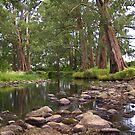Kangaroo Bend by Cole Stockman