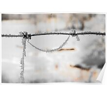 barbwire and frost Poster