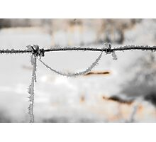 barbwire and frost Photographic Print