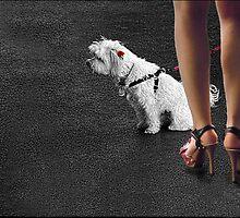 dogged attention by carol brandt