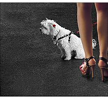 dogged attention Photographic Print
