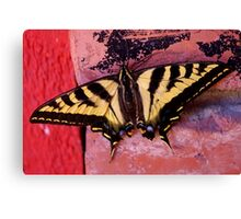 tiger swallowtail on brick Canvas Print