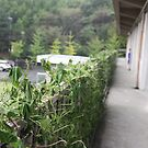 Hitachi Omiya Da-ichi Junior High School by James  Yu