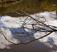 The Sanctuary (16) - Tidbinbilla Nature Reserve by Wolf Sverak