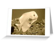 PLATAX ALBINOS! Greeting Card