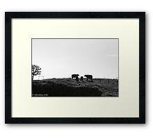 stone bulls Framed Print