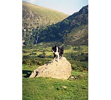 Young Indy at Aber Falls Photographic Print