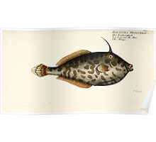 General natural history of fish  Germany Allgemeine naturgeschichte der fische Marcus Elieser Bloch Plates 1795 0084 Poster