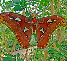 Sleeping Moth by Robert Abraham