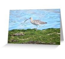 What a long beak I have Greeting Card