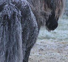 Frosty Bertie by Pauline-W