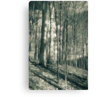 Trees And Shadows Lake La Su An Canvas Print