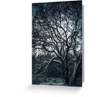 8.12.2010: Winter Tree Dream Greeting Card