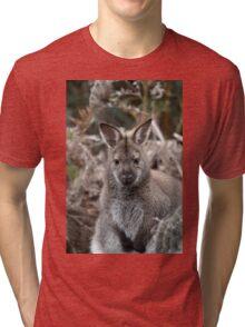 Bennetts Wallaby Tri-blend T-Shirt
