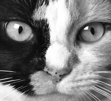 """Calico Eyes"" - Ying and Yang Cat by John Hartung"
