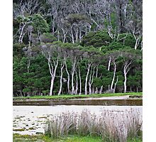 tidal riverscape 2 Photographic Print