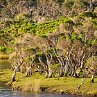 tidal riverscape by Bruce  Dickson
