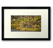 tidal riverscape Framed Print