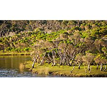 tidal riverscape Photographic Print