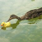 """""""Adopted?"""" - A real duck looks into adopting a rubber duckie by ArtThatSmiles"""